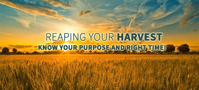 reaping-your-harvest-know-your-purpose-and-your-right-time